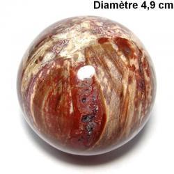 Bois fossile de Madagascar - Boule n°3